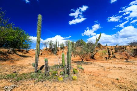 grandes cactus en desierto rojo, el desierto de la Tatacoa, Colombia, América Latina, las nubes y la arena, arena roja en el desierto