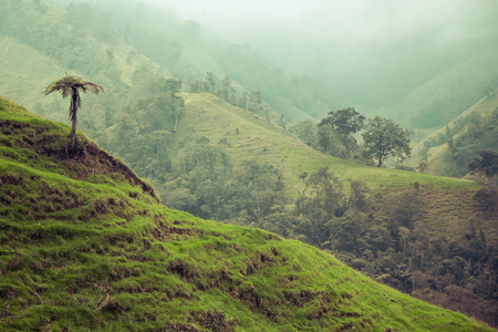 cafe colombiano: selva en las montañas de Colombia verdes, Colombia, América Latina