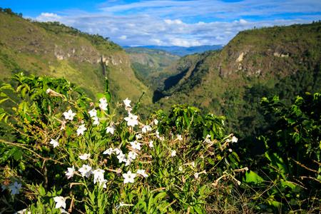 latin america: landscape jungle in green mountains, colombia, latin america Stock Photo