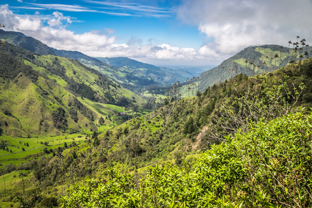 landscape jungle in green mountains, colombia, latin america 写真素材
