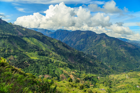 planta de cafe: paisaje de la selva en las montañas verdes, Colombia, América Latina