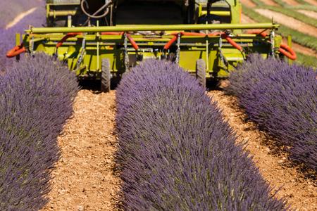 lavender harvester agricultural provence france