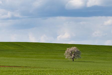 South Moravian fields, moravia, rows, czech republic, moravian landscape Stock Photo
