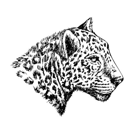 Sketch of the head of a leopard in black and white