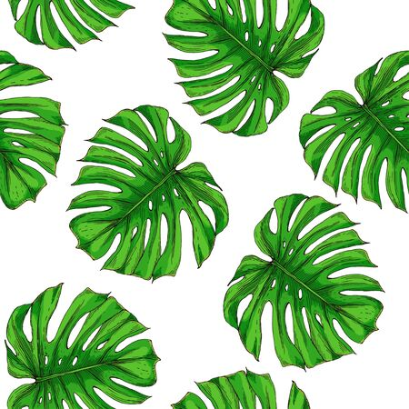 Seamless pattern of monstera leaves. Green leaves of Monstera on a white background. Иллюстрация