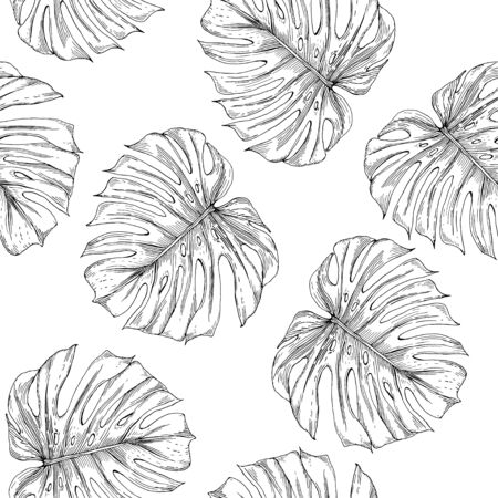 Seamless pattern of monstera leaves. Monstera leaves are drawn in the form of a sketch on a white background. Иллюстрация