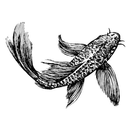 Sketch of a floating fish. Separate image of perch ink on paper.