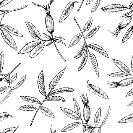 Sketch of rosehip branches. Set of twigs with berries. Black and white image. Seamless background.