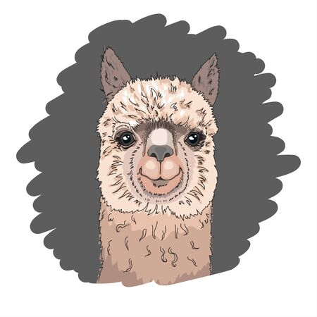 Cool poster. Portrait of a cheerful llama. Greeting card, t-shirt composition, hand-drawn print style. Vector illustration