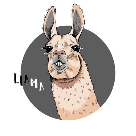 Cool poster. Portrait of a cheerful llama. The inscription Lama. Greeting card, t-shirt composition, hand-drawn print style. Vector illustration