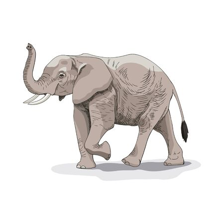 Drawing of an African elephant. Vector illustration. Suitable for printing on a t-shirt, box, bag.