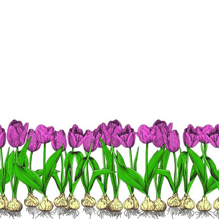 Canvas of tulips on a white background. Bouquets of pink tulips with green leaves and roots of bulbs. Seamless vector pattern.