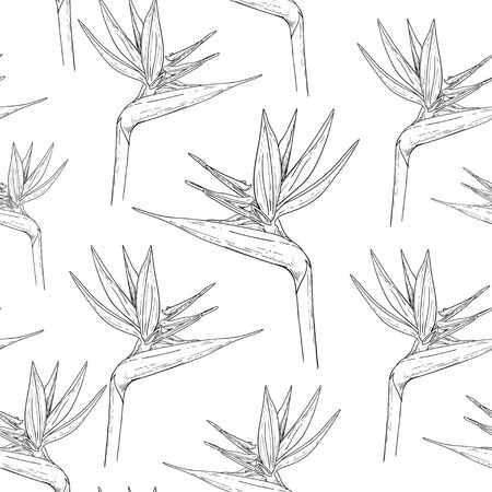 Strelitzia flowers in the form of a sketch. Black and white pattern seamless pattern. Botanical image.