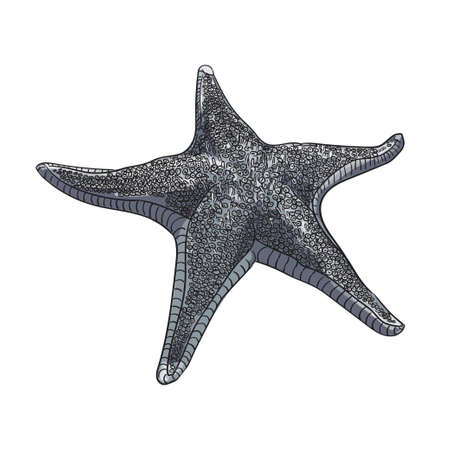 Vector image of a starfish in gray-blue range on a white background.