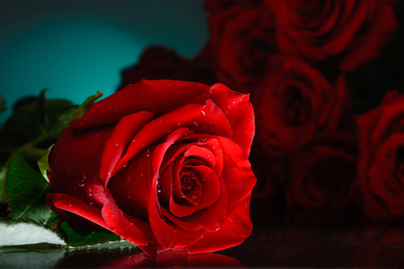 Red roses on a blue background. Shiny surface. Bouquet of flowers.