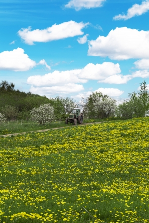 Dandelion field with a tractor in the distance Stock Photo - 13679976