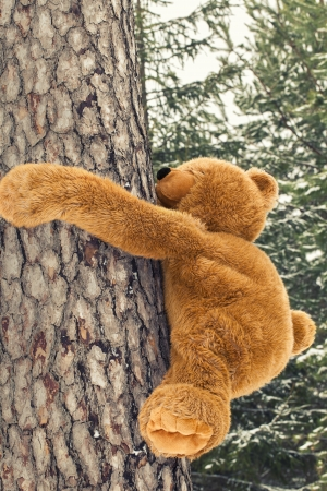 Toy bear climbing  on a tree in forest photo