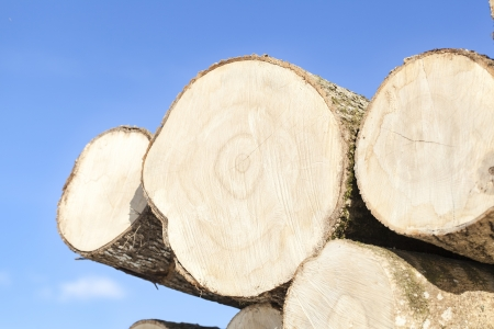 Large logs stacked on a blue sky background