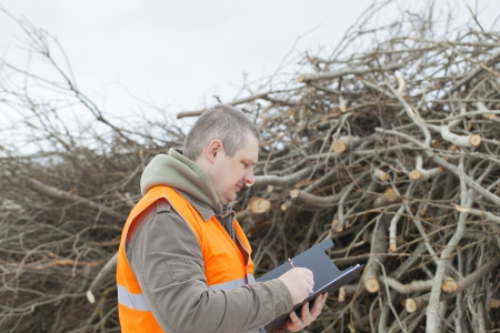 biomasse: Employee near branches before preparing in wood chips Stock Photo