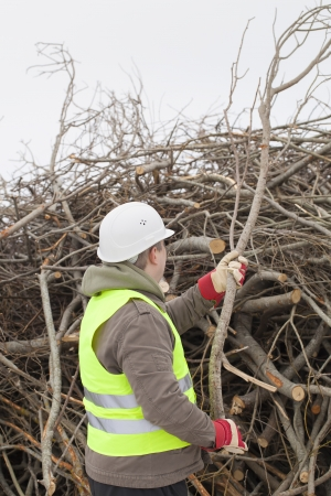 biomasse: Worker with a branch in hands at the big pile of twigs