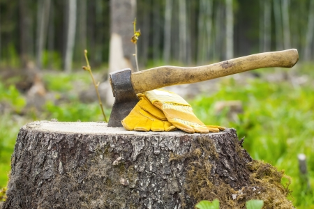 Ax carved in stump in forest Stockfoto