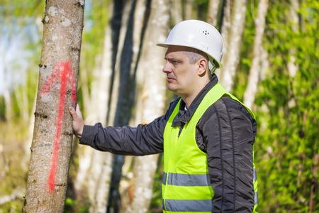 Lumberjack near marked tree in forest photo