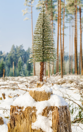 Artificial fir in destroyed forest on the stump photo