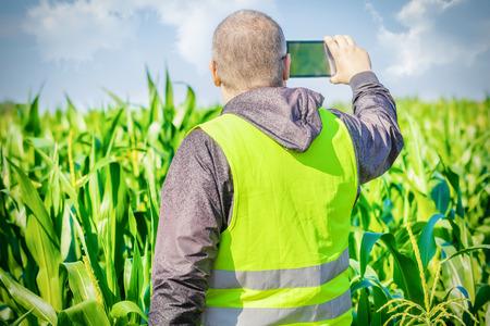 food inspection: Farmer filmed with tablet PC on corn field