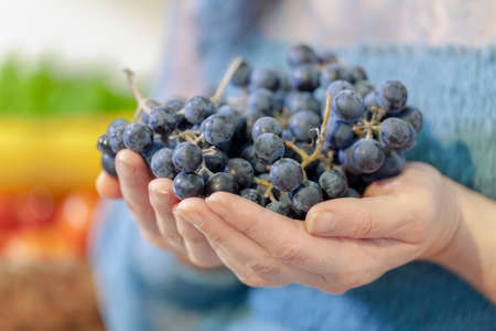 Woman holds bunches of grapes in her hands Stockfoto