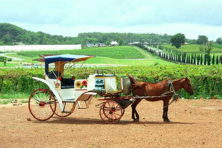 Horse Carriage At Garden View