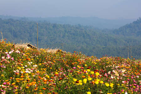 Colorful Garden Full With Flower On Top Of Mountain photo