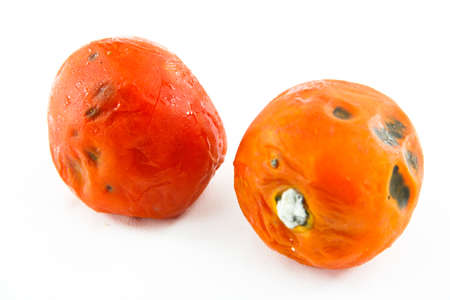 2 Rotten Tomatoes On White Background photo