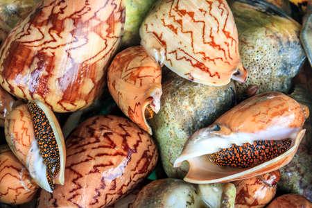 street market: Street Market Shellfish Store