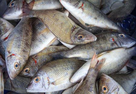 fish store: Market Street Fish Store