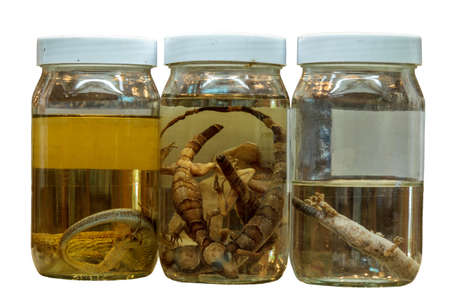 Isolated Three Bottles Of Lizards Science Specimens