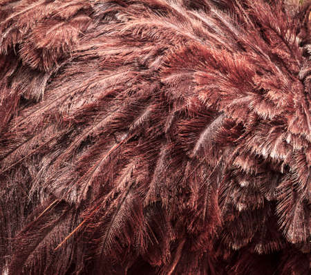Ostrich Feather Pattern Close Up photo