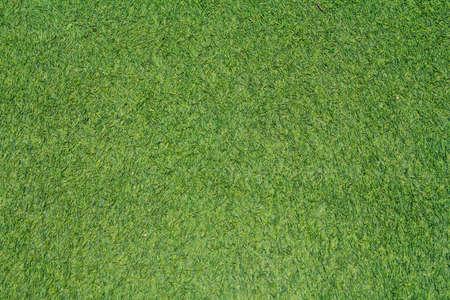 Beautiful Fresh Green Grass Background photo