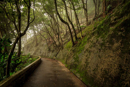 hong kong street: Forest Way With Tranquil Hill Stock Photo