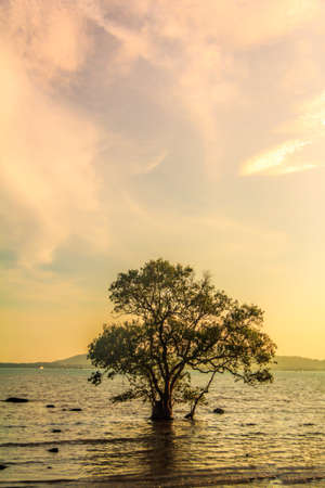 Morning Sunrise With Dry Tree Silhouette At The Beach photo