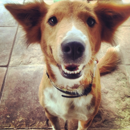 shakti: Cute dog  Stock Photo