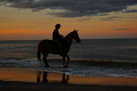 rider at sunset