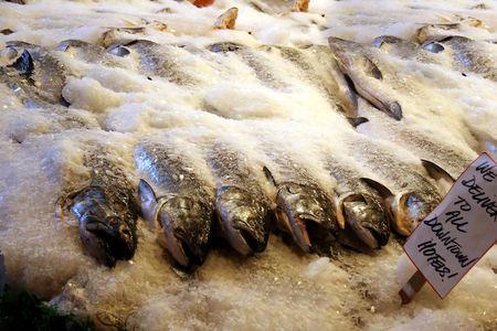 Fish on ice photo