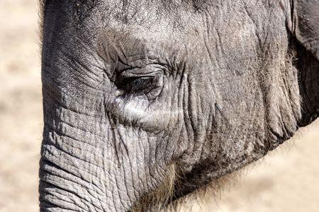 running nose: Elephant