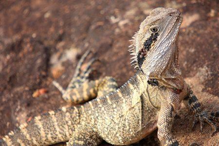 Lizard close up photo