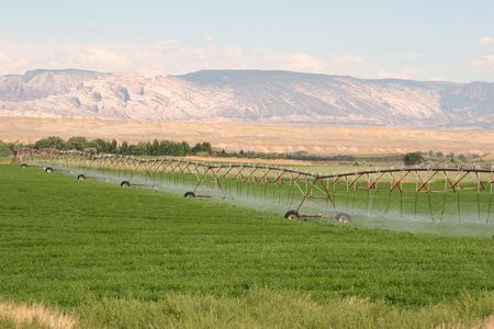 pivotal: Irrigation sprinklest     Irrigation sprinklers watering a farm field  Stock Photo