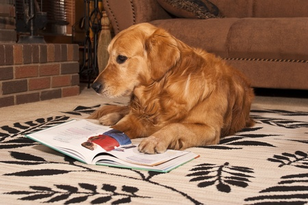Smart Dog Reading a book