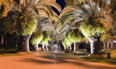 Palm trees at night Stock Photo