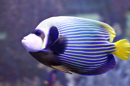 reef fish: Underwater at  a coral colony