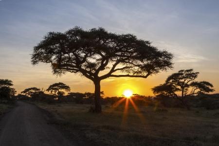 Sunset At Serengeti National Park Archivio Fotografico