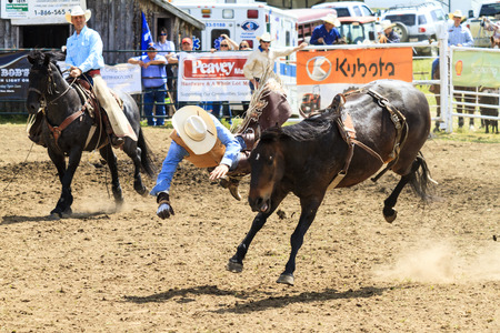 a rural community: WATER VALLEY CANADA  JUN 6 2015:Unidentified Cowboy participating in the  Bareback Bronco Water Valley Rodeo.This annual event is important for the rural as well as the sport loving community. Editorial